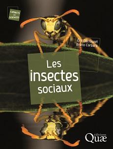fourmis et insectes sociaux