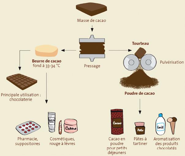 Extraction du beurre de cacao et poudre de cacao
