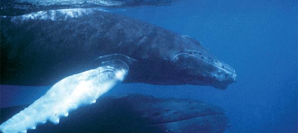 Mammifères marins dans le froid polaire