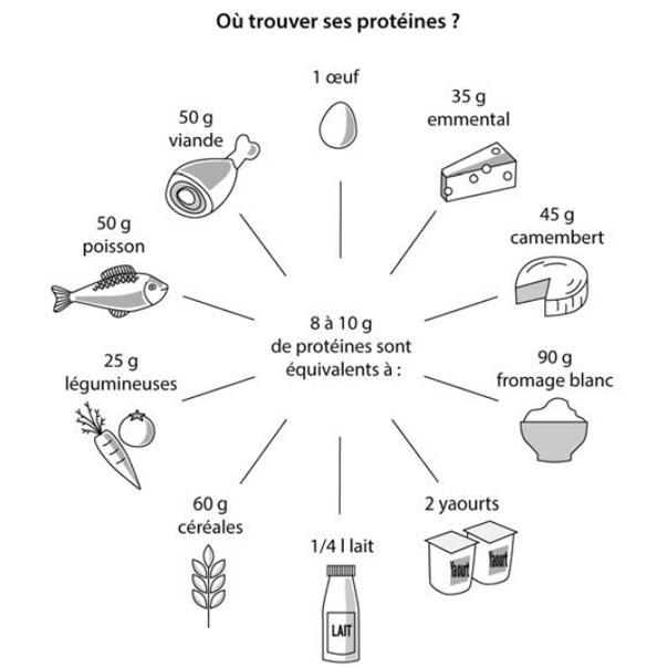 proteine par jour