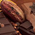 cacao et tablette de chocolat